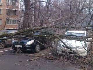 Ветер, дождь и наводнение: на Северо-Западе и в Центре России наступило зимнее лето
