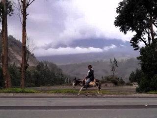 В Эквадоре 16 человек насмерть отравились метанолом