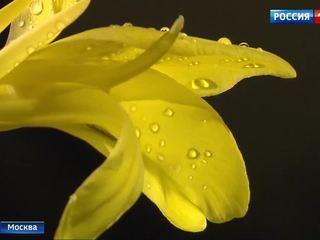 """В """"Аптекарском огороде"""" открывается новая тропическая оранжерея"""