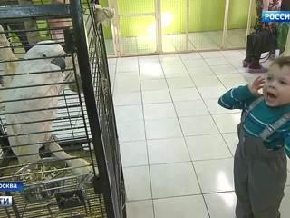 Защитить диких от цивилизованных: выживут ли контактные зоопарки в Москве?
