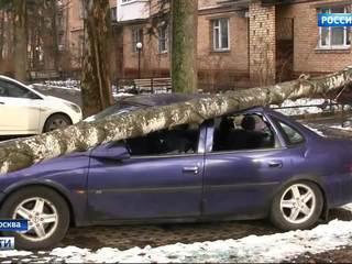 Первые жертвы непогоды: в Москве ветром валит деревья