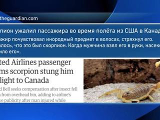 Пассажира United Airlines во время полета ужалил скорпион