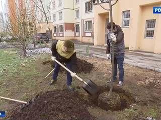 """В столице стартовала акция """"Миллион деревьев"""""""