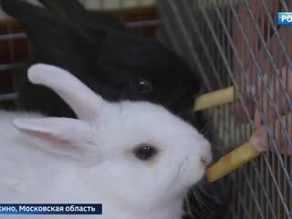 Сто зверей под одной крышей: в Пушкине требуют закрыть контактный зоопарк