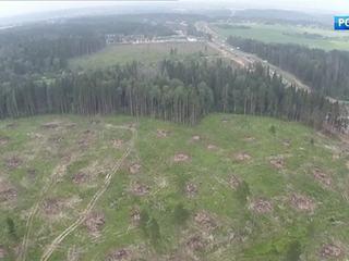 В Москве и трех соседних областях объявлено об угрозе лесных пожаров