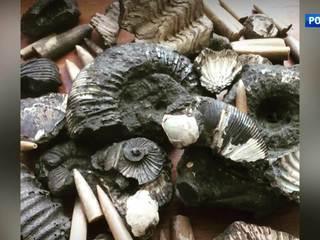 Ровесники динозавров на востоке Москвы: удивительная находка местных жителей