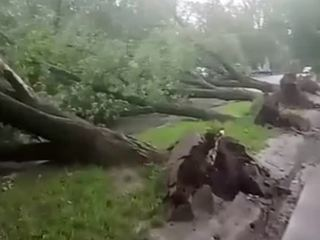 Ураган в Москве: информацию о погибших подтвердили в СКР