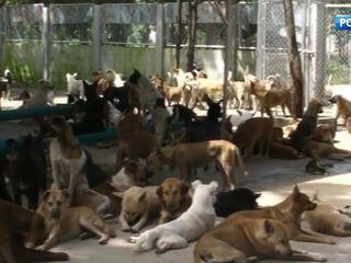 Защита домашних животных: опыт Поднебесной