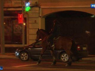 Конные клубы в столице: как защитить животных