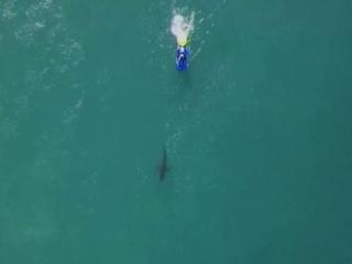 Серфингистов во время соревнований чуть не съела акула. Видео