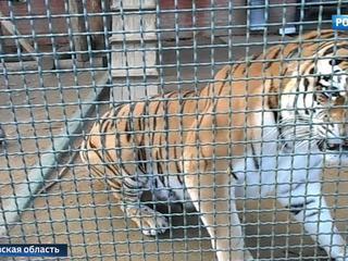 Бэби-бум в столичном зоопарке: самое долгожданное пополнение - у амурских тигров