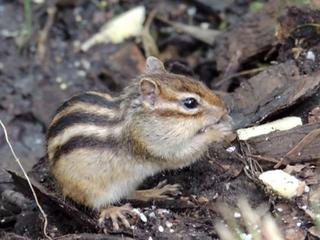В Амурской области экологи спасают животных от наводнения