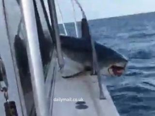 Акула запрыгнула на рыбацкий катер: видео