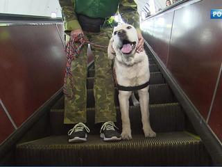 Тренировка в подземке: как обучают собак-проводников