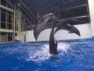 После гибели очередного дельфина директор Приморского океанариума ушел с поста