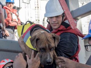 5 месяцев в Тихом океане: пассажирок сломавшейся яхты спас годовой запас овсянки