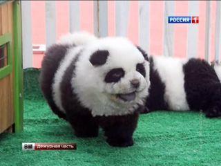 Сочинские фотографы выдавали щенка за панду