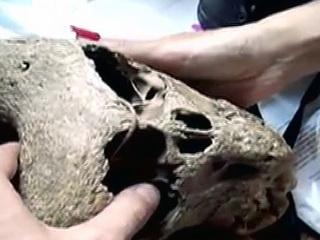 """В Адыгее нашли таинственные черепа и сундук с эмблемой """"Аненербе"""""""