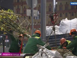 Зеленый ноябрь: на московских улицах высадили 2 тысячи деревьев