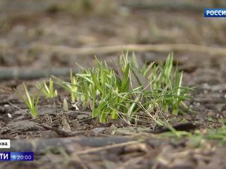 На термометрах цифры со знаком плюс: Москва готовится к настоящей весне