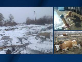 Более 400 приусадебных участков подтоплены паводком в Алтайском крае
