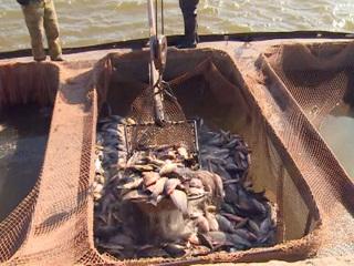 В Астрахани начался промышленный лов рыбы