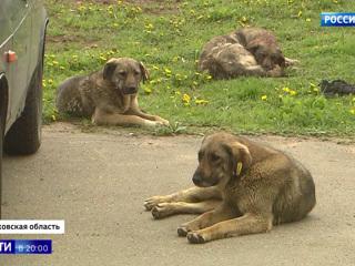 Одичавшие собаки нападают на людей и животных: насколько серьезна угроза и что будет дальше
