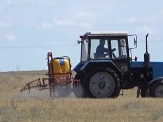 В Калмыкии спасают будущий урожай от нашествия саранчи